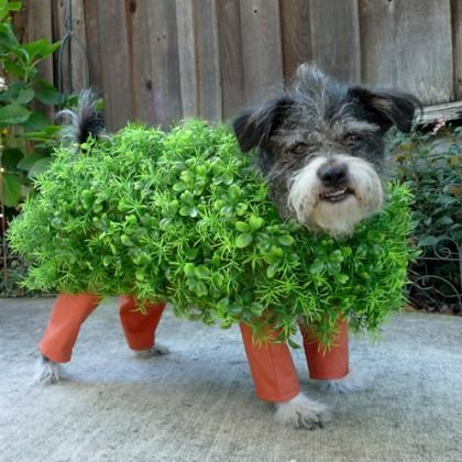 our 6 favorite dog halloween costumes