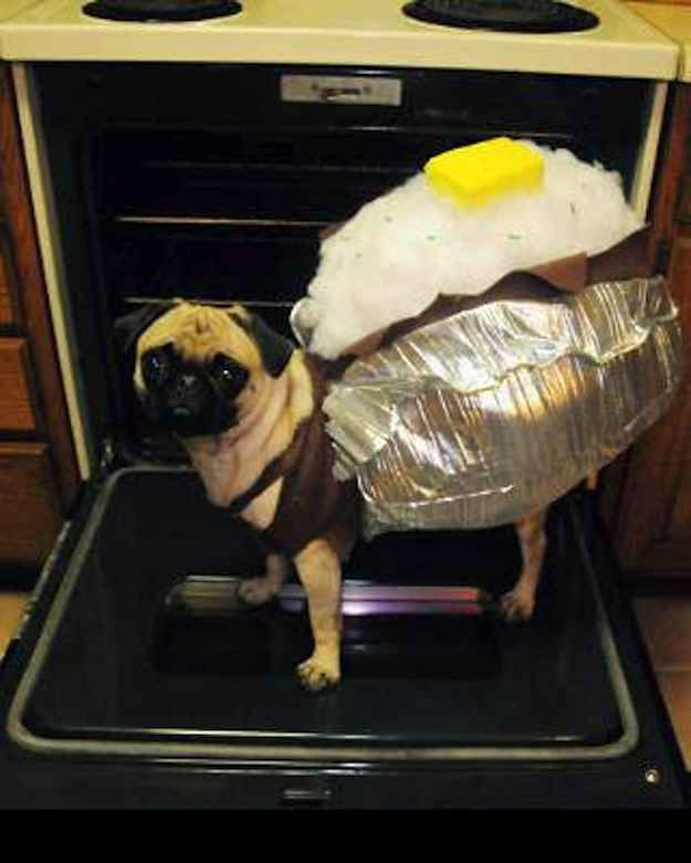 Our 6 Favorite Dog Halloween Costumes - Righteous Hound